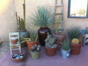cacti Joshua Tree